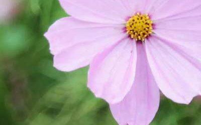 2ème Marché aux plantes « Aux Noms de la Rose »